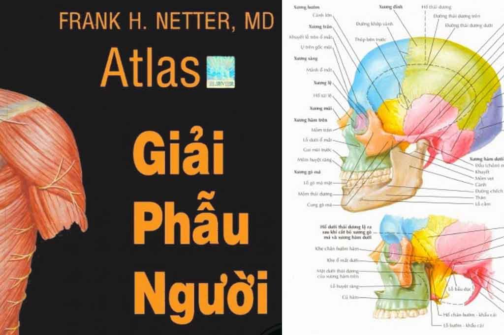 BÍ QUYẾT học tập tốt môn Giải phẫu sinh lý cho sinh viên ngành Y Dược