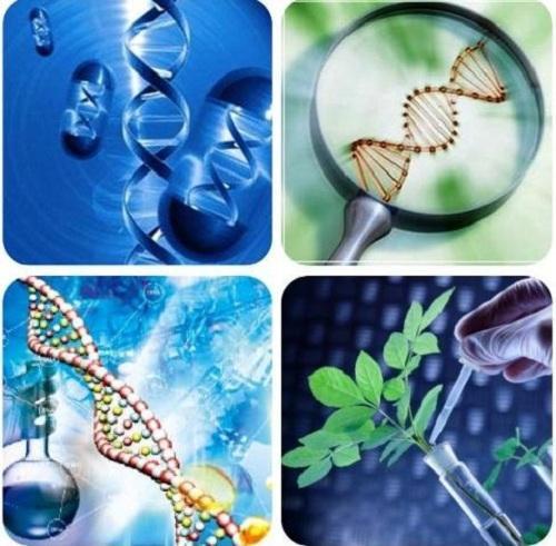 Công thức tính nhanh phần cấu trúc di truyền trong môn Sinh học năm 2018
