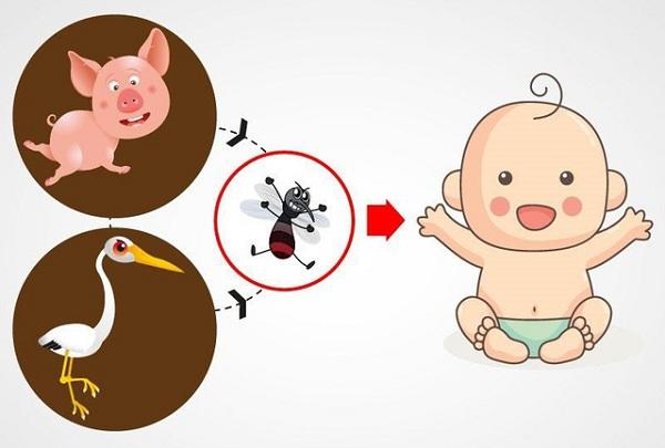Con đường lây truyền của virus viêm não Nhật Bản